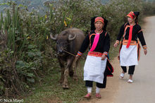 Apron, Earring, Hat, Lai Chau, Leggings, Vietnam, Water Buffalo, Yao
