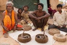Chhattisgarh, Cobra, Gond, India