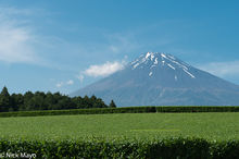 Japan, Kanto, Tea Field