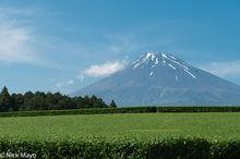 Japan, Kanto, Tea Field