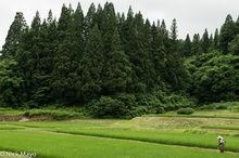 Japan, Paddy, Tohoku