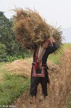 Apron, Ha Giang, Paddy, Vietnam, Yao