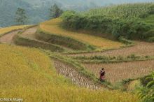 Apron, Ha Giang, Miao, Paddy, Vietnam