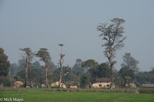 Nepal, Terai, Village
