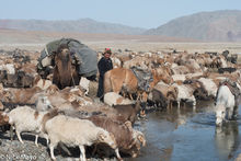 Bayan-Ölgii, Camel, Goat, Horse, Kazakh, Mongolia, Pack Animal, Sheep
