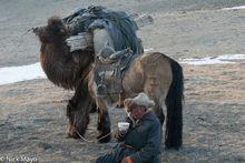 Bayan-Ölgii, Camel, Drinking, Horse, Kazakh, Mongolia, Pack Animal, Tea