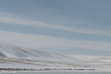 Bayan-Ölgii, Horse, Mongolia