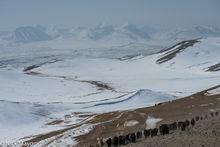 Bayan-Ölgii, Goat, Mongolia