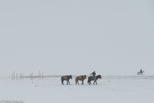 Leading The Horses In The Snow Storm