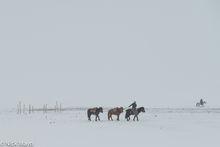 Bayan-Ölgii, Horse, Kazakh, Mongolia