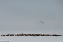 Bayan-Ölgii, Goat, Kazakh, Mongolia, Sheep