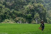 Dai, Fishing Net, Paddy, Son La, Vietnam