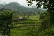 Dien Bien, Paddy, Residence, Vietnam