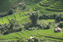 Ha Giang, Hut, Paddy, Vietnam