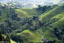 Cascading Terraces Of Verdant Rice