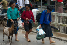 Goat, Ha Giang, Head Scarf, Market, Necklace, Vietnam, Zhuang