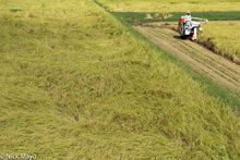 Chubu, Harvesting, Japan, Paddy