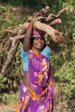Firewood, India, Madhya Pradesh