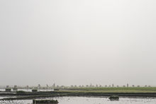 Rice Planting On The Kengtung Plain