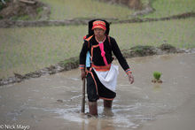 Black Dao Woman Wading In The Field