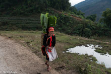 Black Dao Girl Carrying Banana Leaves