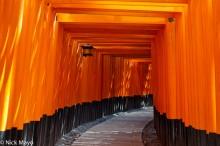 Torii On Inari-san