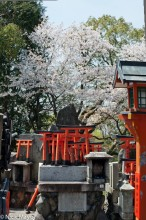 Japan,Kinki,Shrine,Statue
