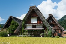 Chubu,Japan,Paddy,Residence,Roof,Thatch