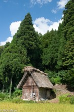 Chubu,Hut,Japan,Paddy,Thatch