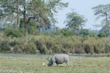 Assam,India,Rhino