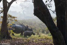 Rhino & Mother In Morning Light