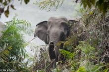 Assam,Elephant,India
