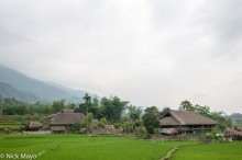Thatched Houses & Paddy