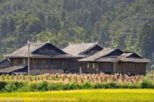 China,Guizhou,Paddy,Residence