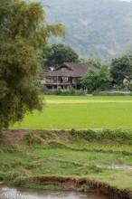 Thai House Behind The Paddies