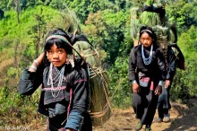 Burma,Earring,Eng,Grass,Shan State,Strap