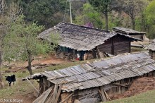 China,Cow,Residence,Roof,Yunnan