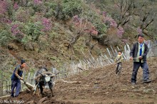 Ploughing The Hillside Field