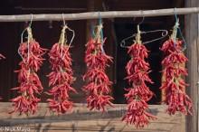 Chilli,China,Guizhou