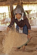 Burma,Hani,Headdress,Paddy,Shan State,Winnowing