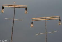 Ceremonial Bobo Poles