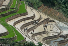 Farmers Preparing The Rice Fields