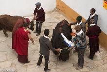Changpa, Festival, India, Jammu & Kashmir, Monk, Religious Ritual, Yak