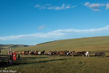 Horse, Khovsgol, Mongolia