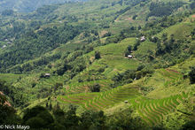 Magnificent Rice Terraces