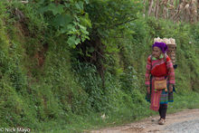 Hmong Woman Carrying Corn Home