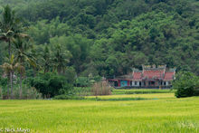 Rice Field & Temple