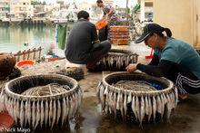 Bait Line, Fishing Harbour, Penghu, Taiwan