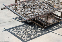 Sun Drying The New Catch