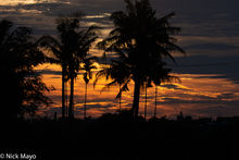 Coconut Palm, South, Taiwan